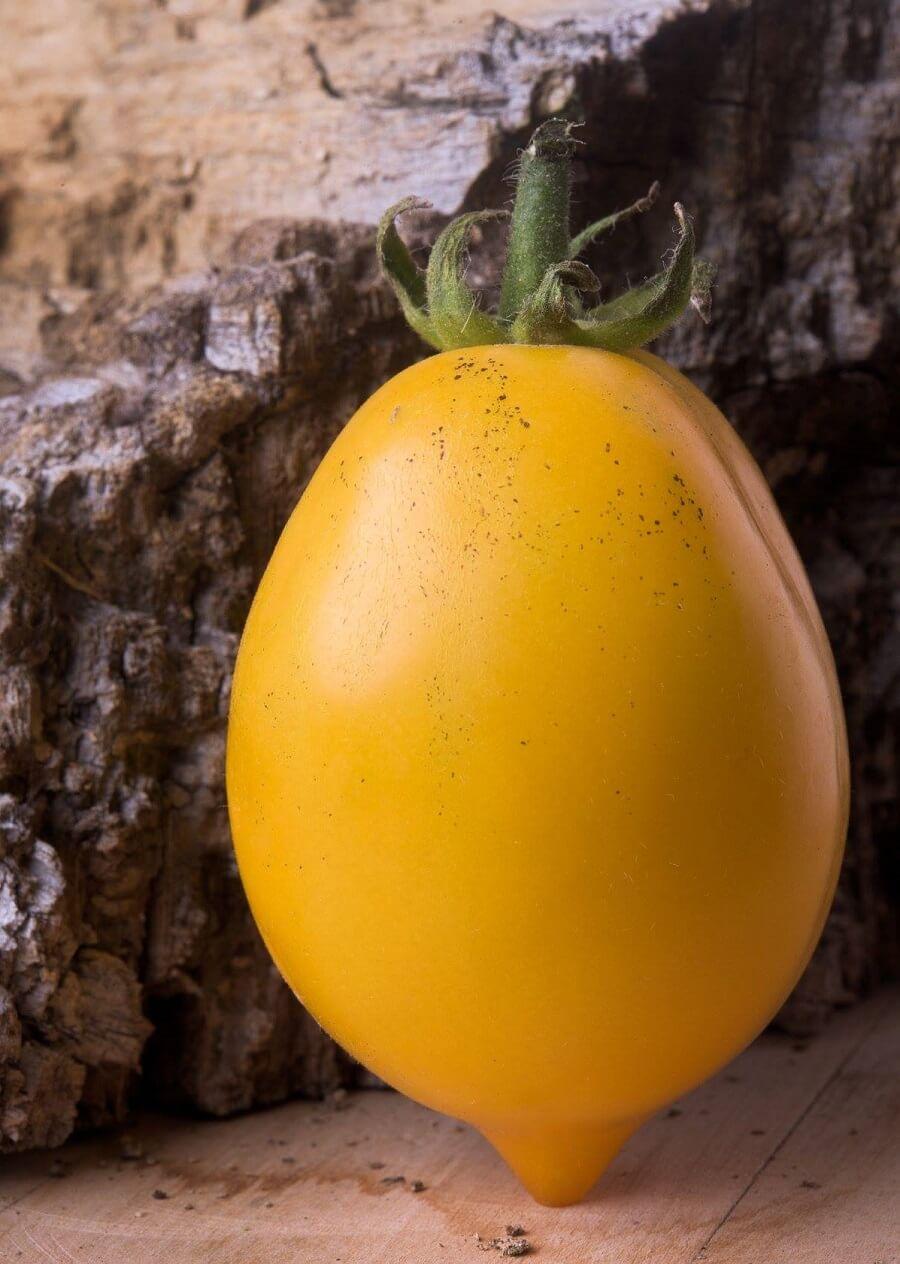 Buniol Lemon Tree