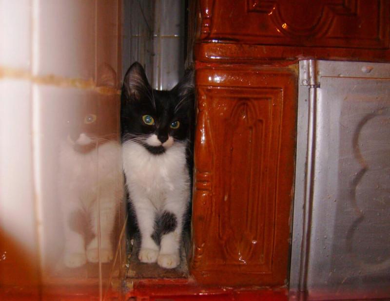 pisica la Ferma lu Mos Ghita (34)