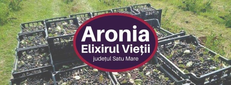 Aronia Elixirul Vieții, plantatie aronia Romania, judetul Satu Mare, plantatie ecologica aronia