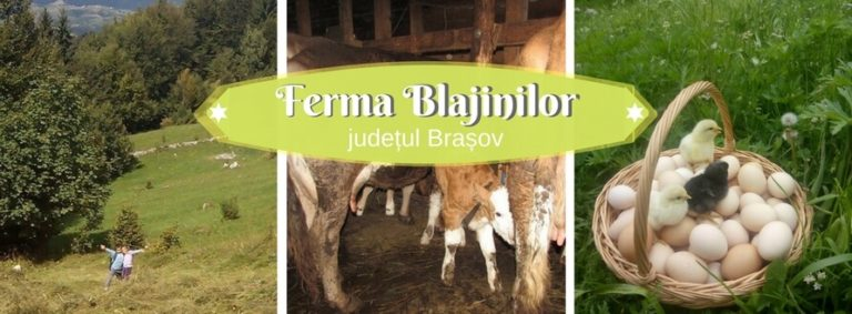 Ferma Blajinilor, branzeturi, carne si oua din judetul Brasov