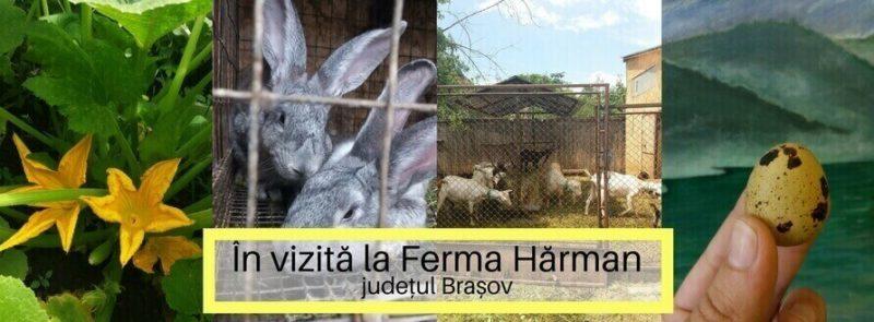 In vizită la Ferma Hărman din, judetul Brasov