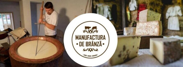 Manufactura de Branza din Cund, judetul Cluj, branza maturata din lapte de la vaci Baltata Romaneasca