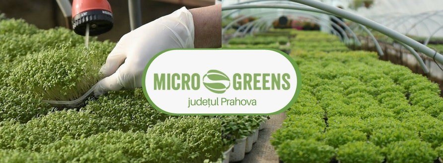 Microgreens România, județul Prahova