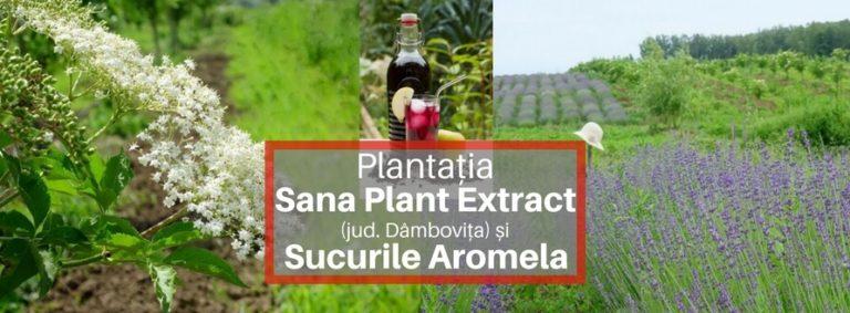Plantația Sana Plant Extract, suc Aromela, suc bio de aronia, suc de soc bio si aronia bio (1)