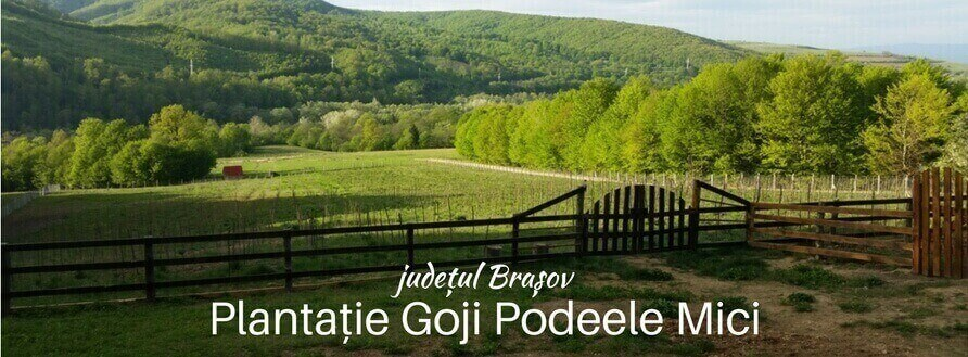 Goji Bio, județul Brașov