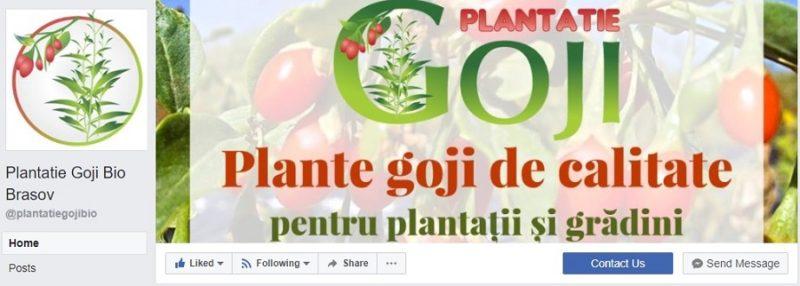 Plantatie goji bio Brasov, goji Romania