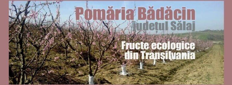 pomaria-badacin-judetul-salaj-livezi-fructe-ecologice-transilvania-1