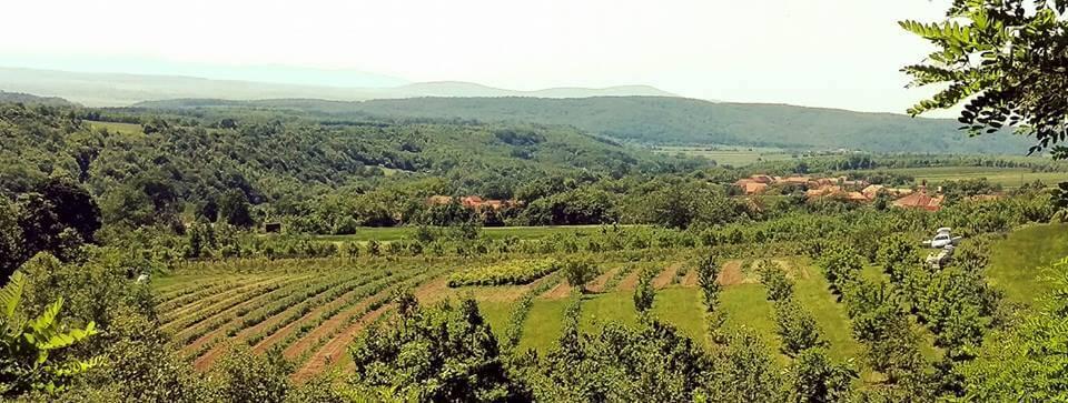 Vedere peste Ferma Bărzani